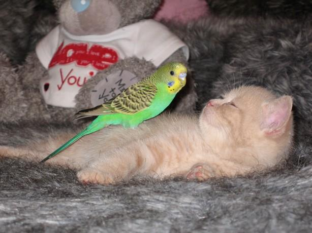 Kitten-and-bird-5