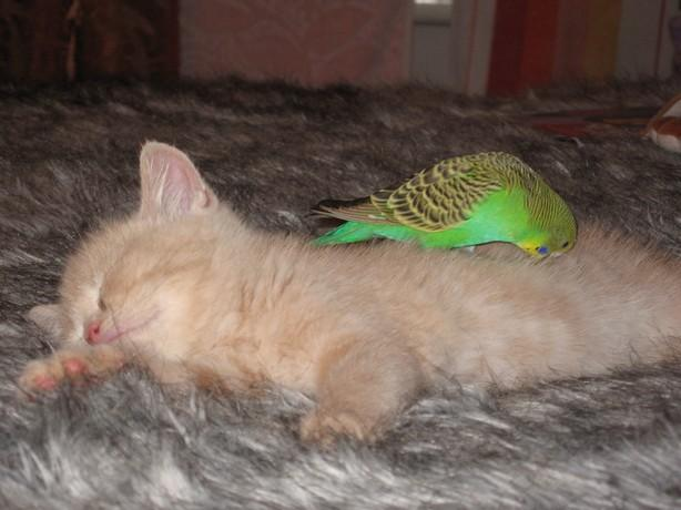 Kitten-and-bird-6