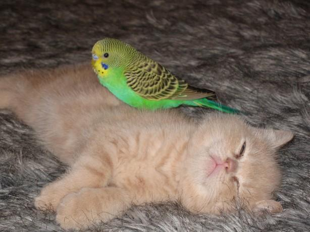 Kitten-and-bird-8